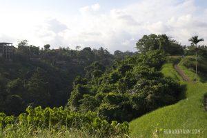 Ubud – Saraswati Temple, Monkey Forest & Campuhan Ridge Walk