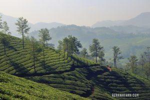 Munnar – Tea Plantation Trekking